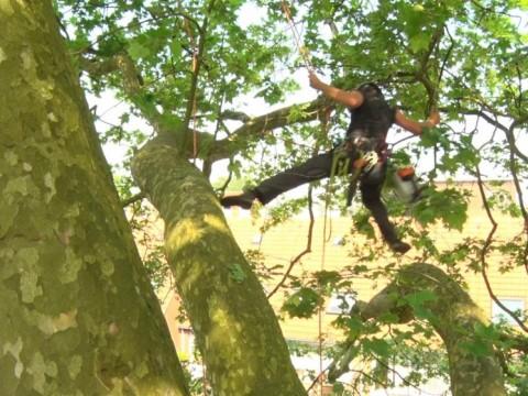 Behoud de stadsboom: Bewoners redden 90-jarige boom door adoptie Rochussenstraat