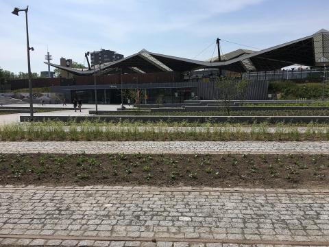 Aanleg beplanting Burgemeester Stekelenburgplein Tilburg gereed